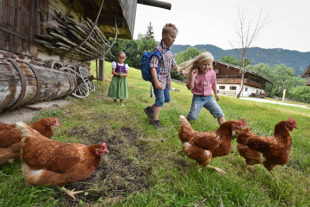 Frischluft, Freiraum, Federvieh: Das ist Urlaub am Bauernhof im Alpbachtal.