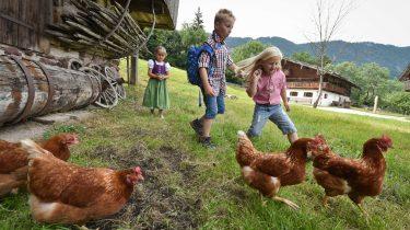 Urlaub am Bauernhof im Alpbachtal